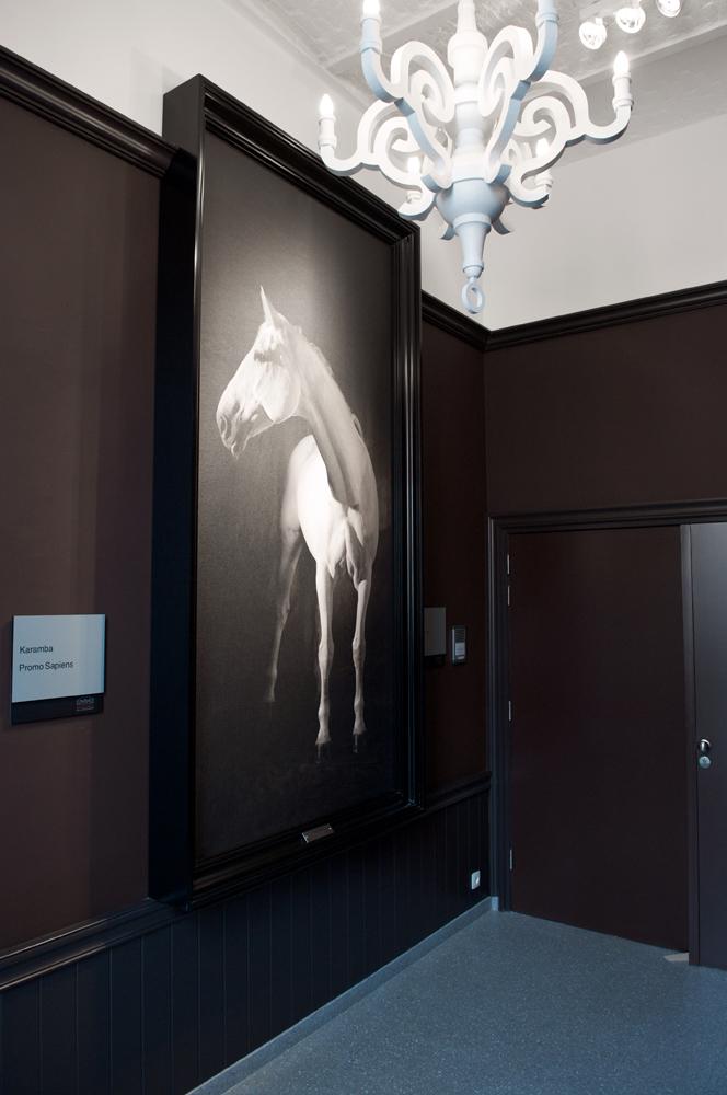 foto wit paard in zwart kader