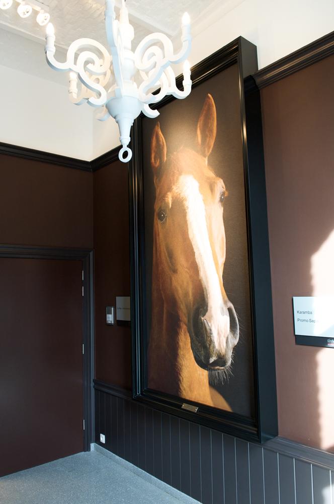 foto paard in zwart kader